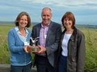 Silver Lapwing flies from Sussex to Wales