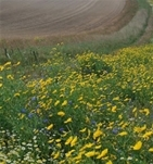 GWCT welcomes announcement to guarantee funding for Agri-Environment schemes