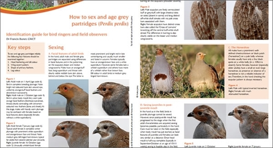 Grey Partridge Sexing Ageing Guide