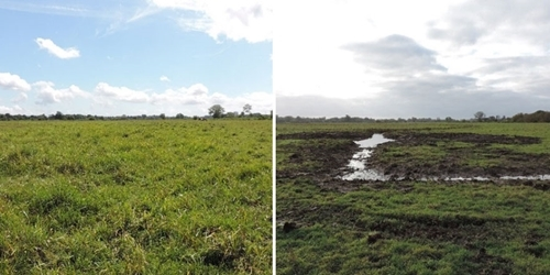 Before (left) and after (right) the creation of a shallow gutter and scrape to improve chick foraging habitat