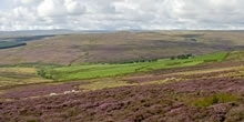 Grouse shooting guide