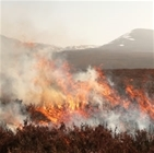 RSPB 'twisted data' on heather burning?