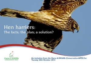 Hen harriers: The facts, the plan, a solution?