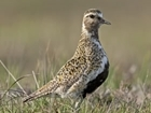 The Golden Plover Award 2017 is now open for applicants