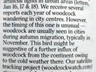 Woodcock watch: our letter in The Times