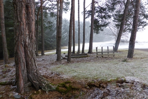Auchnerran's woodland in the snow