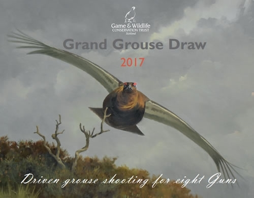 Grand Grouse Draw