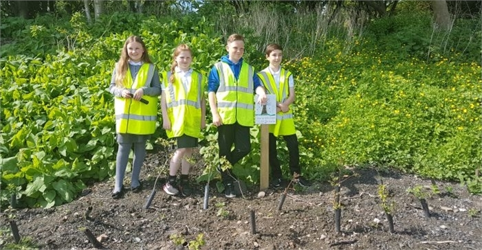 School pupils re-visit Balgonie hedge