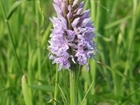The orchids of Rotherfield Farms