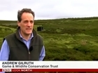 Video: GWCT feature in BBC curlew festival coverage