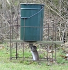 New rat control survey - have your say