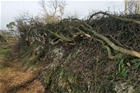 Hedgelaying: promoting the skill for the future