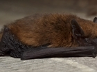 Learning about bats on farmland thanks to National Lottery funding