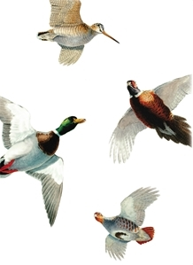 The GWCT's free shoot sweepstakes pack is strikingly illustrated by renowned wildlife artist Owen Williams
