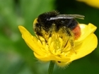 Why all the fuss about pollinators?
