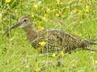 Together we can make a difference for curlew