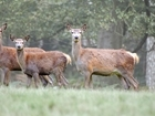 Shropshire venison evening to raise funds for wildlife conservation