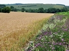 Defra's 'Path to Sustainable Farming' promises a positive approach to conservation
