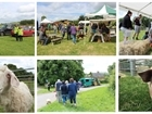 Celebrate British farming with us on Open Farm Sunday