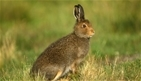 Mountain hares – heed 50 years of science