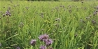 Cover Crop Update from Allerton by Kings Crops