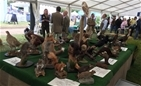 GWCT at BBC Countryfile Live