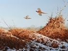 British countryside celebrated in striking new GWCT Christmas cards