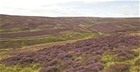 Grouse moor changes would lead to loss of important biodiversity: Our letter to The Telegraph