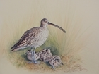 Stunning painting raises £625 for threatened curlew