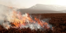 Heather burning on blanket bog: The long-term effects for vegetation