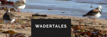 GWCT LIFE Waders For Real _Wader Tales Logo _small