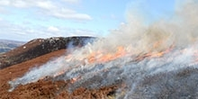 Heather burning: Its impacts on peat formation and carbon storage